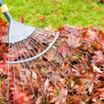 Fall Home Maintenance - Raking